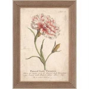 """Malanta Knowles Designer Framed Print: """"Vintage Carnation"""""""