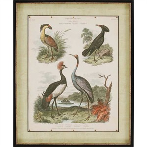 """Edwards Deluxe Framed Print: """"Heron and Crane II"""""""