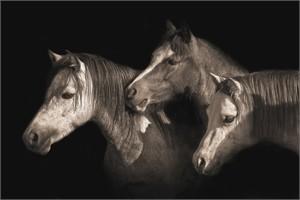 """Robert Dawson Fine Art Open Edition Canvas Giclee: """"Three Ponies"""""""