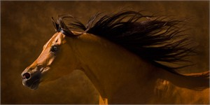 "Robert Dawson Fine Art Open Edition Canvas Giclee: ""Arabian Runner"""