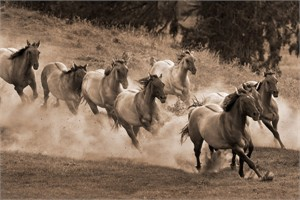 "Robert Dawson Fine Art Open Edition Canvas Giclee: ""Leader of the Pack"""