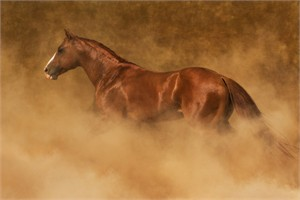 "Robert Dawson Fine Art Open Edition Canvas Giclee: ""Out of the Dust"""