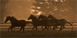 "Robert Dawson Fine Art Open Edition Canvas Giclee: ""Running For Home II"""