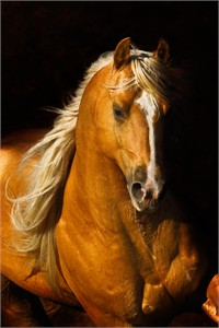 "Robert Dawson Fine Art Open Edition Canvas Giclee: ""Sherry's Boy"""