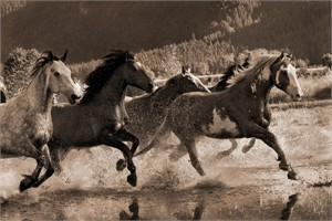 "Robert Dawson Fine Art Open Edition Canvas Giclee: ""The Big Race"""