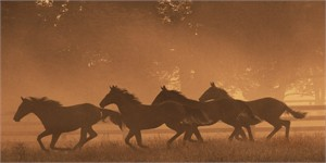 "Robert Dawson Fine Art Open Edition Canvas Giclee: ""The Sprint for Home"""