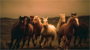 "Norm Clasen Hand Signed and Numbered Canvas Giclee: ""Twilight"""