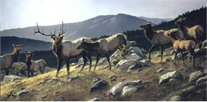 "Nancy Glazier Limited Edition Canvas: ""High Country"""