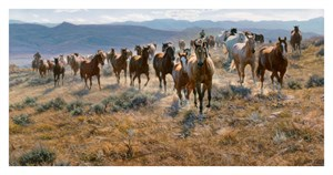 "Tim Cox Handsigned & Numbered Limited Edition  Canvas:""Cow Horse Country """