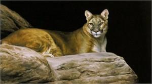 "Edward Aldrich Limited Edition Artist Proof Print: ""Lion's Lair"""