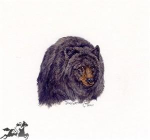 "Jean Gasser Giclee on Paper with Deckled Edges :""BLACK BEAR VIGNETTE"""