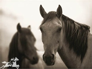 """Kimerlee Curyl Gallery-Wrapped Canvases :""""CHIEF AND HIS MARE"""""""