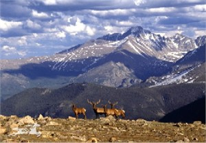 "Claude Steelman Giclee :""ELK & LONG'S PEAK"""