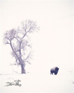 "Claude Steelman Giclee :""SNOW BISON"""