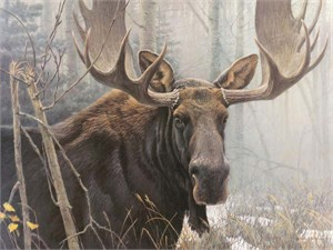 "Robert Bateman Handsigned and Numbered Limited Edition Renaissance Giclee on Canvas: ""Bull Moose"""