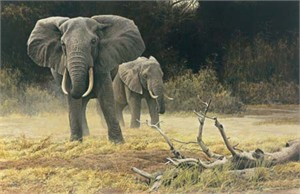 "Robert Bateman Handsigned & Numbered Limited Edition Giclee on Canvas:""Elephant Cow and Calf"""