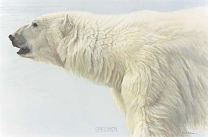 "Robert Bateman Handsigned & Numbered Limited Edition Giclee on Canvas:""Polar Bear Profile"""