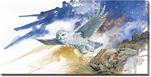 "Janene Grende Wrapped Canvas:""From The North – Snowy Owl"""