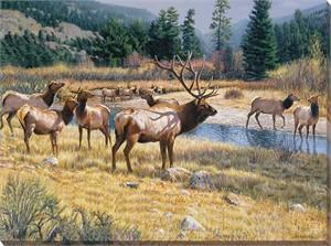 "Jim Kasper Gallery Wrapped Giclee Canvas:""Sunspot – Elk"""