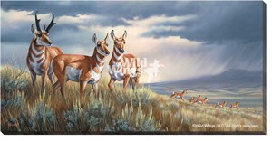 "Rosemary Millette Gallery Wrapped Canvas Giclee:""Approaching The Storm – Pronghorns"""