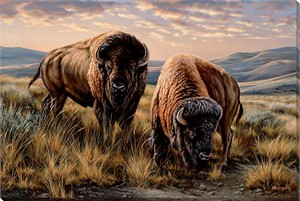 "Rosemary Millette Gallery Wrapped Canvas Giclee:""The Landlords – Bison"""