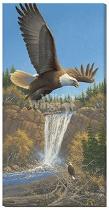 "Michael Sieve Gallery Wrapped Canvas Giclee:""Eagles and Waterfall"""