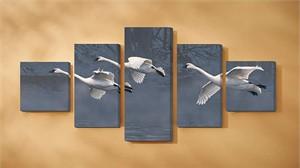 """Scot Storm Wrapped Canvas Quintet Set/5:""""Natures Grace – Swans"""""""