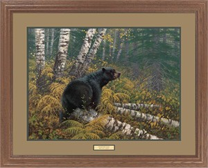 "Michael Sieve Premium Framed Print:""Northwoods-Black Bear"""