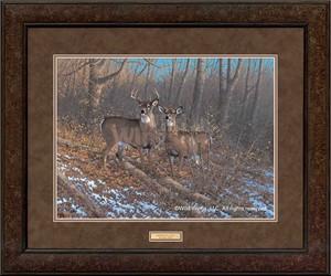 """Michael Sieve Framed Art Print:""""Morning Sun-Whitetail Deer"""""""