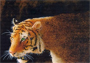 "Will Bullas Fine Art Signed Open Edition Paper :""Stripes in the Dark"""