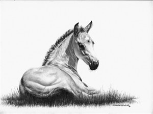 "Shannon Lawlor Handsigned and Numbered Limited Edition: ""Heaven Sent A Buckskin"""