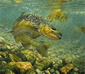 "Mark Susinno Limited Edition Artist Remarqed Print: ""Brown Trout - Duped"""