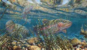 "Mark Susinno Limited Edition Print: ""Rainbow Trout"""