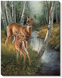 "Rosemary Millette Open Edition Wrapped Canvas: ""Birch Creek � Whitetail Doe & Fawn"""