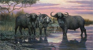 "Ron Van Gilder Handsigned and Numbered Limited Edition Canvas: ""Nightfall - Cape Buffalo Canvas"""