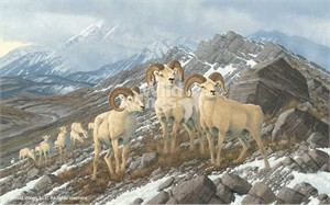 "Michael Sieve Hand Signed and Numbered Limited Edition Art Print:""Alpine Kings-Dall Sheep"""