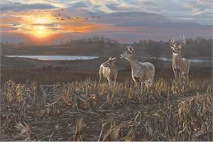 "Scot Storm Limited Edition Print:""Evening Glow-Whitetail Deer"""