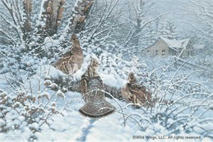"Michael Sieve Handsigned and Numbered Limited Edition Print: ""Hunkered Down - Ruffed Grouse Print"""