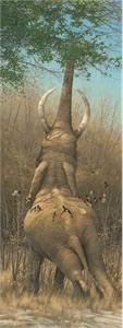"""Limited Edition Premier Giclée Canvas:""""Smörgåsbord – Elephant"""""""