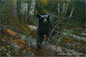 "Michael Sieve Handsigned and Numbered Limited Edition Canvas Giclee: ""Black Ghost-Black Bear"""