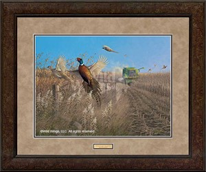 "Michael Sieve Open Edition Framed Print: ""Flying Colors-Pheasants"""