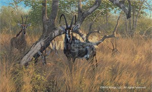 "Michael Sieve Limited Edition Premier Giclée Canvas:""Black Magic – Sables Antelope"""
