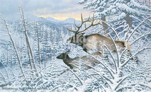 "Michael Sieve Limited Edition Artist Proof Print: ""Royal Flush-Elk"""