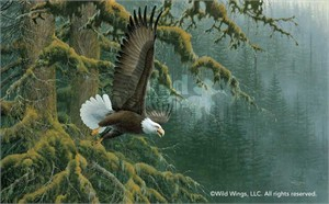"Michael Sieve Handsigned and Numbered Limited Edition Print: ""Misty Forest - Bald Eagle"""