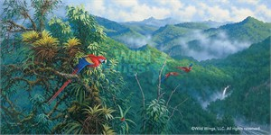 "Michael Sieve Handsigned and Numbered Limited Edition Print: ""Panama Red Macaws"""