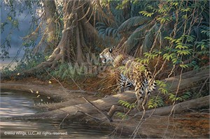 "Michael Sieve Handsigned and Numbered Limited Edition Print: ""River Heat-Jaguar"""