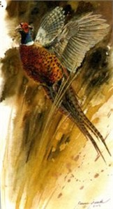 "Janene Grende Handsigned & Numbered Limited Edition Print:""Flushed Pheasant"""