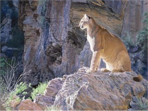 """Jim Kasper Framed Hand Signed and Numbered Limited Edition:""""Canyon Glow- Mountain Lion"""""""