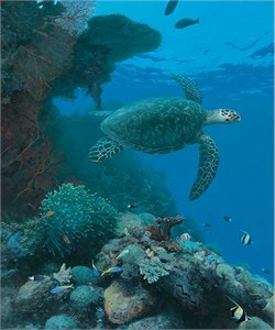 "Randall Scott Limited Edition Premier Giclée Canvas:""Reef Sentinel"""