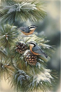 "Rosemary Millette Limited Edition Print: ""Winter Gems-Nuthatch"""
